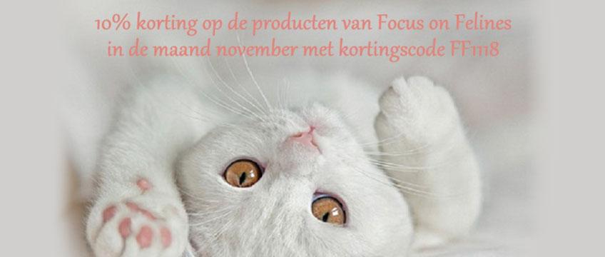 Focus on Felines